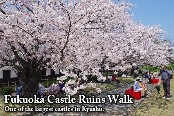 Fukuoka Castle Ruins Walk - Fukuoka Castle is one of the largest castles in Kyushu, Japan